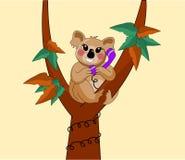 Koala op boom op telefoon Stock Fotografie