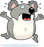 Koala Panic Royalty Free Stock Image