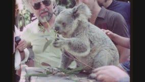 Koala Petting stock footage