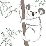 Koala que senta-se em uma árvore. Imagem de Stock