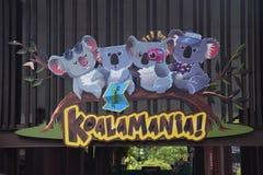 Koala At The Singapore Zoo Royalty Free Stock Photography