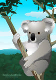 Koala sitting in a gum tree in Australia Royalty Free Stock Image