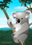 Koala sitting in a gum tree in Australia Royalty Free Stock Image