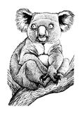 Koala sitting on a tree branch Stock Images