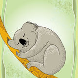 Koala sleeping on the decorative branch Royalty Free Stock Image