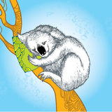 Koala sleeping on the decorative orange branch Stock Image