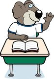 Koala Student Stock Photography