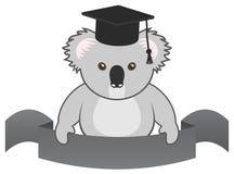Koala student Stock Image