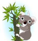 Koala sveglia su un albero Immagini Stock