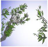 Koala sveglio su un albero Fotografia Stock
