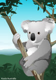 Koala in tree, Australia. Stock Photography