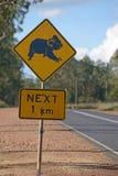 Koalas cross here Royalty Free Stock Photo