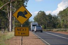 Koalas cross here Stock Image