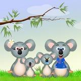 Koalas family Royalty Free Stock Photos