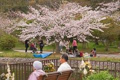 KOBE JAPAN  APRIL 3 Cherry blossom celebration Royalty Free Stock Image