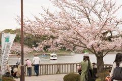 KOBE JAPONIA KWIECIEŃ 3 Czereśniowego okwitnięcia świętowanie Obraz Royalty Free