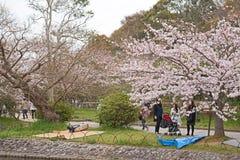 KOBE JAPONIA KWIECIEŃ 3 Czereśniowego okwitnięcia świętowanie Zdjęcia Royalty Free