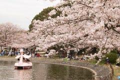 KOBE JAPONIA KWIECIEŃ 3 Czereśniowego okwitnięcia świętowanie Zdjęcie Stock
