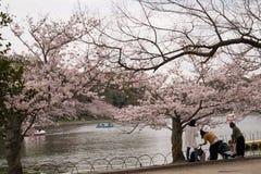 KOBE JAPONIA KWIECIEŃ 3 Czereśniowego okwitnięcia świętowanie Fotografia Stock