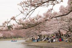KOBE JAPONIA KWIECIEŃ 3 Czereśniowego okwitnięcia świętowanie Fotografia Royalty Free