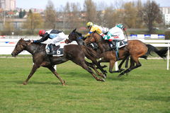 Kobi horse - horse racing in Prague Stock Images