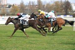 Kobi horse - horse racing in Prague Stock Images