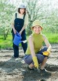 Kobiet loch ziarna przy polem Obraz Royalty Free