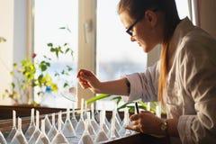 Kobiet magistrant/magistrantka analizing ziarna na kiełkowanie stole Obrazy Stock