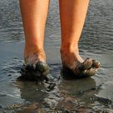 Kobiet nogi. Obraz Royalty Free