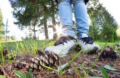 Kobiet nogi w sneakers fotografia stock