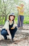 Kobiet pracy przy ogródem w wiośnie Obraz Royalty Free