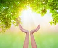 Kobiet ręk chwyta eco życzliwy Zdjęcie Stock