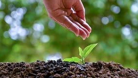 Kobiet ręki nawadniają młode rośliny pojęcie przyrost zbiory wideo