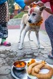 Kobiet ręki ozdabiają psa dla Kukur festiwalu w Nepal zdjęcie royalty free