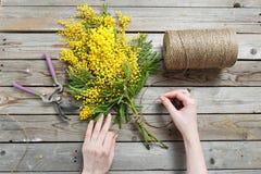 Kobiet ręki robią bukietowi mimozy bandaże splatają i ogrodnictwo nożyce na nieociosanym drewnianym stole Obraz Royalty Free