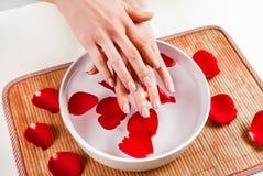 Kobiet ręki z beży gwoździ naturalnym kolorem i puchar z płatkiem wody i czerwieni róży Zdjęcie Royalty Free