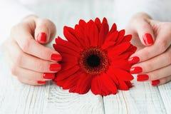Kobiet ręki z pięknym czerwonym manicure'em na paznokciach zdjęcia stock