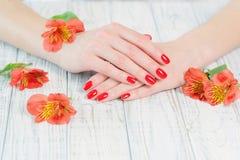 Kobiet ręki z pięknym czerwonym manicure'em na paznokciach obrazy royalty free