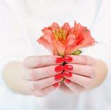 Kobiet ręki z pięknym czerwonym manicure'em na paznokciach Zdjęcie Stock