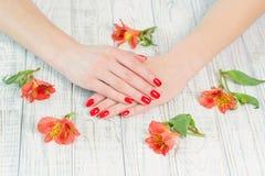 Kobiet ręki z pięknym czerwonym manicure'em na paznokciach zdjęcie royalty free