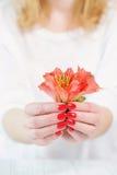 Kobiet ręki z pięknym czerwonym manicure'em na paznokciach Fotografia Stock