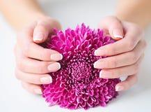 Kobiet ręki z pięknym francuskim manicure'em obraz royalty free