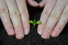 Kobiet ręki zasadzają rozsady w ziemi, ekologii i ziemskiego dnia pojęcie, Fotografia Stock