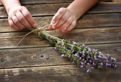 Kobiet ręki trzyma rozmarynów kwiaty Zdjęcia Stock