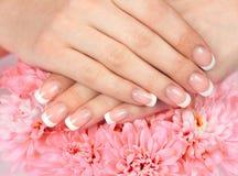 Kobiet ręki z perfect francuskim manicure'em Fotografia Stock