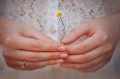 Kobiet ręki z rumiankiem Fotografia Stock