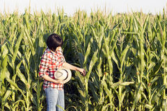 Kobieta agronom egzamininuje ilość kukurudza Fotografia Stock