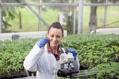 Kobieta agronom robi eksperymentowi na rozsadzie w szklarni Obrazy Stock