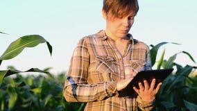 Kobieta agronom używa pastylka komputer w rolniczym kultywującym kukurydzanym polu w zmierzchu zdjęcie wideo