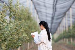 Kobieta agronom w sadzie Fotografia Stock